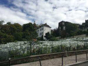 Vigne Montmartre